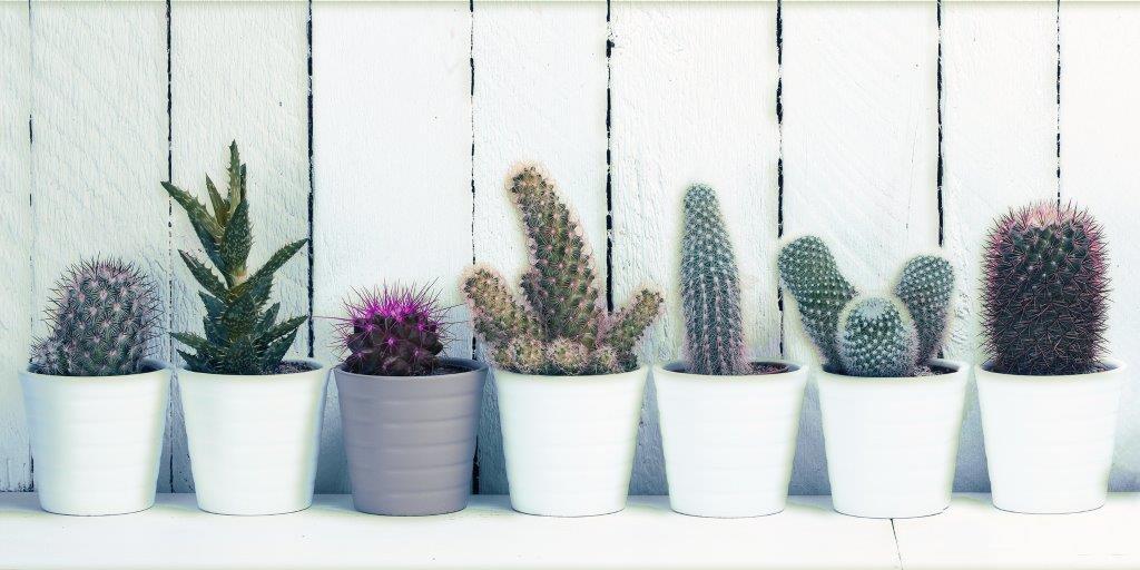 Cactus Glass Panel Image
