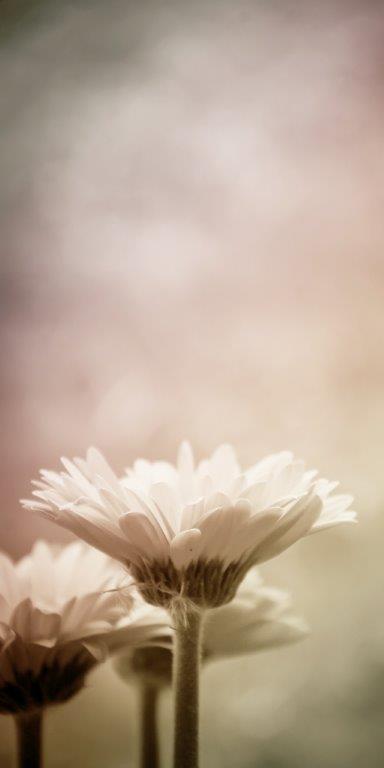 """Daisy Flowers"" Glass Panel Image"